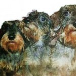 3doggies-copy-150x150
